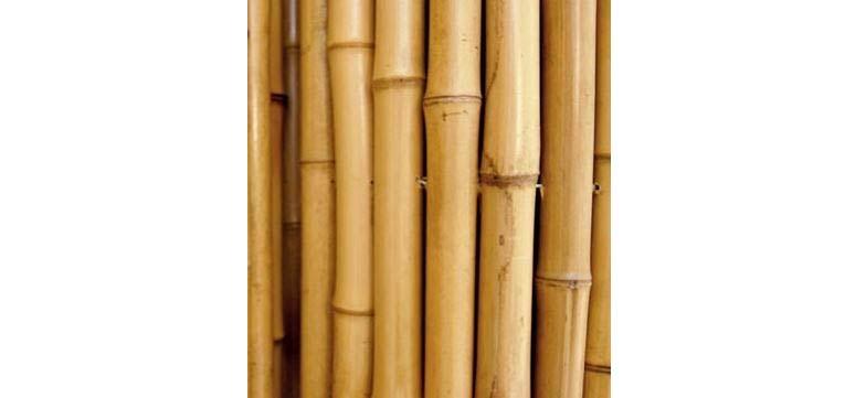 Cañas De Bambu Mejores Precios Y Ofertas 2019